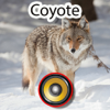 Real Coyote Hunting Calls & Sounds