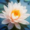Wijsheid van Boeddha