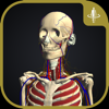 teamLabBody-3D Motion Human Anatomy-