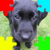 Puppies (Baby Dogs) Jigsaw Puzzles