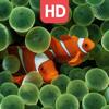 Live Aquarium HD Wallpapers   Backgrounds