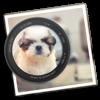 Photo Blur FX - Image Blur - Day 1 Solutions SRL