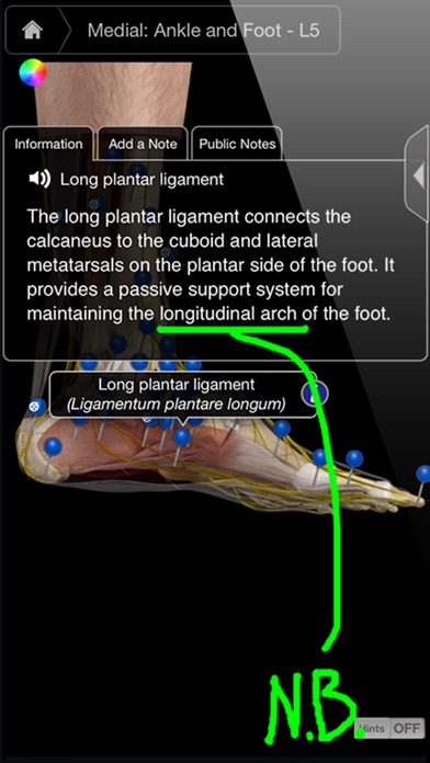 Ankle & Foot Pro III - iPhone Screenshots