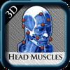 Head Muscles 3D