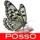 POssO icon