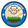 Brilliant Livestock