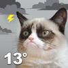 download Grumpy Cat Weather