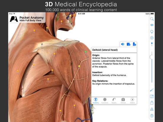 Pocket Anatomy. Screenshots