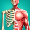 Anatomia 3D: El Cuerpo Humano