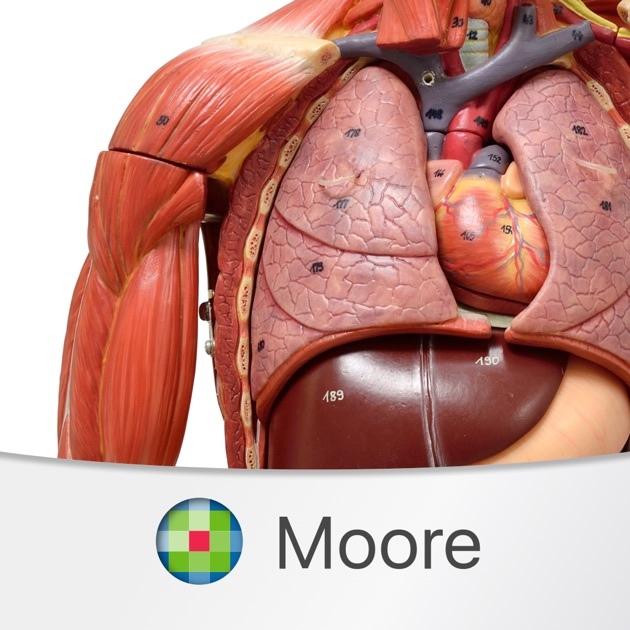 Moores clinical anatomy