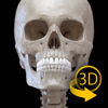 骨骼 - 人体解剖学3D互动图集