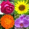 Цветы - Викторина по ботанике