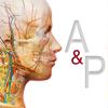 解剖学的構造と生理学-Visible Body