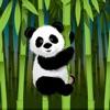 Panda Wallpapers – Panda Pictures & Panda Images