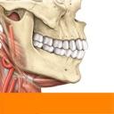 Sobotta Anatomie Atlas
