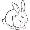 Wild Rabbits One Sticker Pack