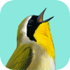 Song Sleuth: Auto Bird Song ID w/ Sibley Reference