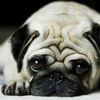 Dog Wallpaper & Background Top HD Cool 10000+
