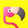 Flamingo-Get Friends,Views & Random Video Chat App