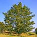 Identification des arbres