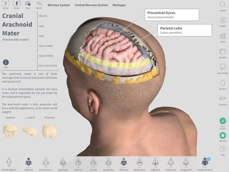 Complete anatomy 19 for mac | Download Complete Anatomy 19 for