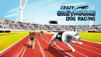Crazy Greyhound Dog RacingСкриншоты 4