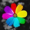 Recolor Picture - Color Pop Effects&Color Splash