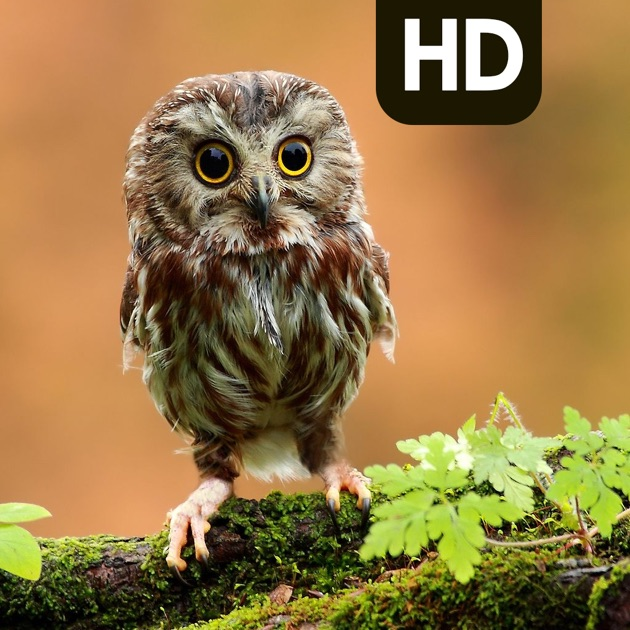 Best Owl Backgrounds Owl HD Picture Wallpaper on the App Store