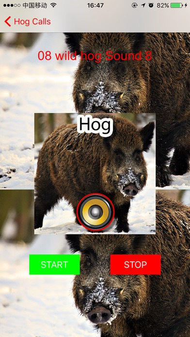 Screenshot for Real Hog Hunting Calls & Sounds in United States App Store