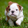 Cute Baby Pet Pictures, Puppy & Animals Wallpapers