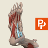 Foot: 3D Real-time Human Anatomy