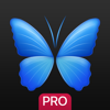 Everpix Pro - HD Wallpapers and Backgrounds - Robert Snopov