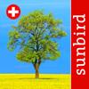 Baum Id Schweiz