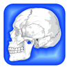 Human Body Facts 1000 Fun Quiz