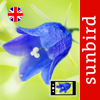 Wild Flower Id Automatic Recognition British Isles