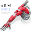 Arm Muscles Motion