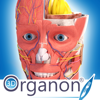 3D Organon Anatomy - Medis Media Pty Ltd