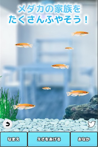 Killifish Aquarium screenshot 3