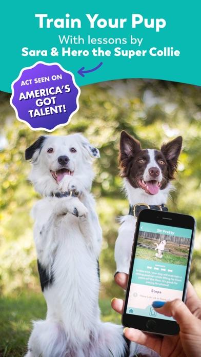 how to teach dog tricks on my dogs app
