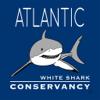 Sharktivity - White Shark Sightings