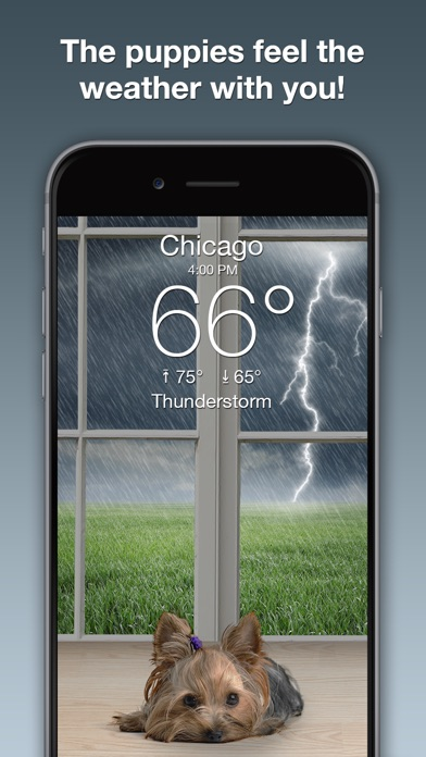 download Weather Puppy: Forecast + Dogs apps 3
