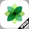 Photo Essential for Snapseed Artistic Image Hosting Edition