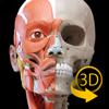 Muskelapparat- 3D Atlas der Anatomie – Knochen und Muskeln des menschlichen Körpers
