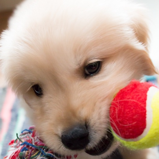 Arrange Dogs iOS App