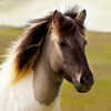 Free Horse Sounds