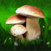 Mushrooms: Great Encyclopedia of Fungi