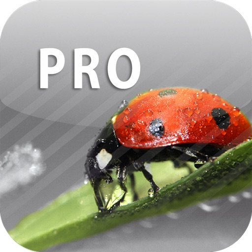 色彩专家:ColorUp Pro – Color Splash Editor