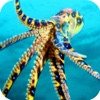 Under-Water Octopus Hunt Pro - Sea Creature Hunt Simulator