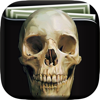 Skull Art Gallery HD – Artworks Wallpapers , Themes and Collection Beautiful Background Wiki
