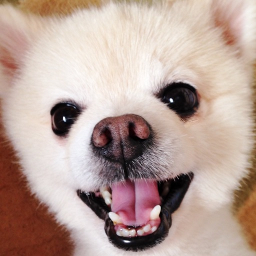 Merge Dog iOS App